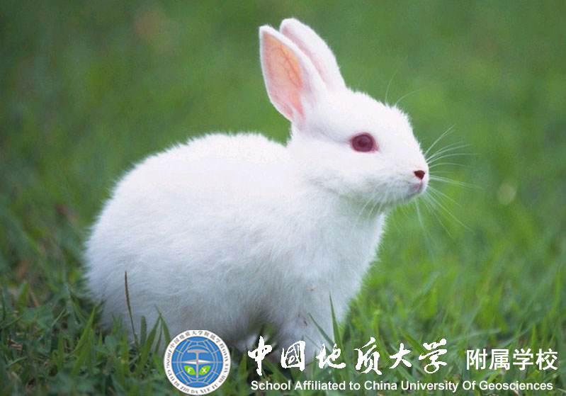 可爱的小兔子(三1班·陈米悦)